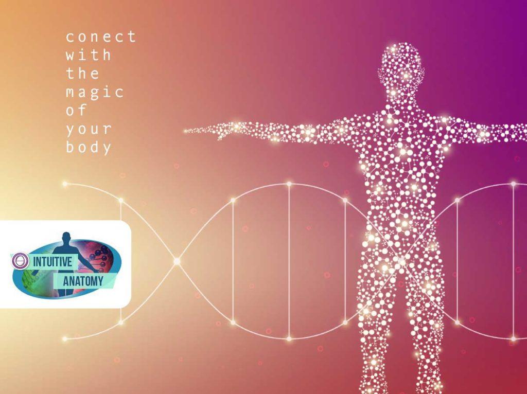ThetaHealing® Intuitive Anatomie