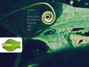 ThetaHealing® Pflanzen Practitioner